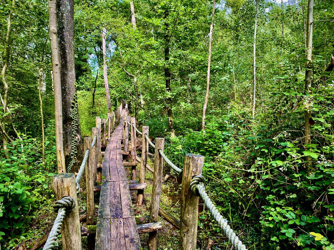 Knuppelpad in de Vallei van de Serskampse beek op de 4 bossenwandeling
